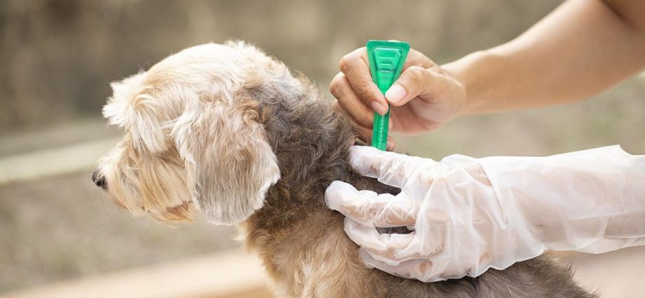 The Natural Way to Treat Your Dog
