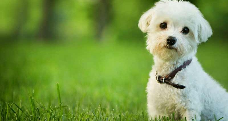 Buy Flea Collars For Dogs